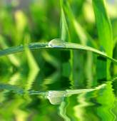 Dew drop on  blade of grass — Stock Photo