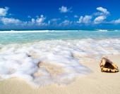 カリブ海のビーチで貝殻 — ストック写真