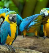 Parrot birds  on nature — Stock Photo