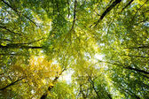 Morning sun in  green forest — Stock Photo