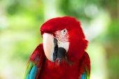 Parrot bird sitting — Stock Photo