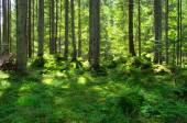 Morning  green forest — Stock Photo
