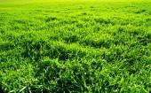 Lawn field — Stock Photo