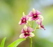 Beautiful orchid flowers — Stock Photo