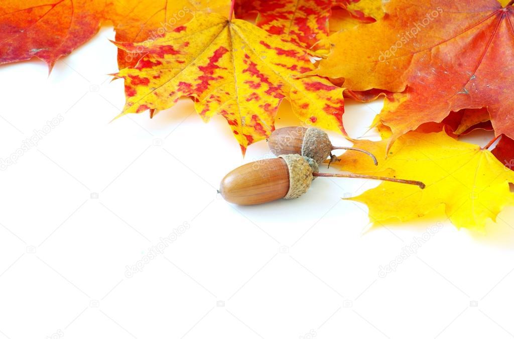 纹理的枫树叶作为背景– 图库图片