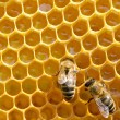 Bees on honeycells — Stock Photo #60006517