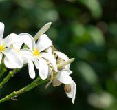 梅香鲜花 — 图库照片