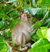 Monkey sitting on the tree — Stock Photo