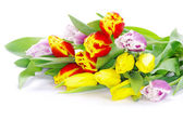Bouquet of fresh  tulips — Stock Photo