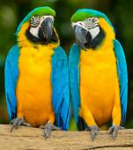 Parrot birds sitting on the perch — Stock Photo