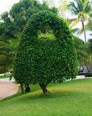 Trees on the green garden — Stok fotoğraf