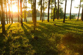 Sunlight in the forest — Stock Photo