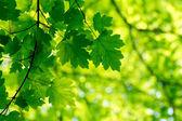 自然の緑の背景 — ストック写真
