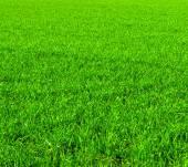 Beautiful green lawn — Stock Photo