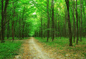 Forest trees in green wood — Stock Photo