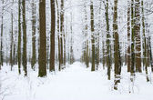 Winter forest and  road — Stock Photo