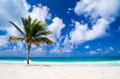 Palm tree on tropical beach — Stock Photo