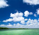 Mangrove trees in Caribbean sea — Foto Stock