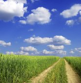 Field and  blue sky — Stock Photo