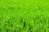 Freshly  grass background — Stock Photo