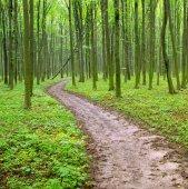 Caminho na floresta verde — Fotografia Stock