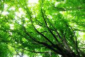 Yeşil orman arka plan — Stok fotoğraf