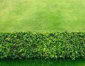 Spring green grass — Stock Photo