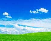 Campo e cielo blu — Foto Stock