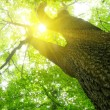 Green forest  background i — Stock Photo #62782369