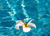 Tropical frangipani flower — Stock fotografie
