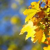 Autumn leaves ackground — Stockfoto