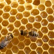 Working bees on honeycells — Stock Photo #64338777