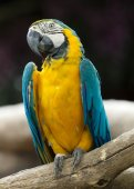 Parrot bird  on perch — Stock Photo