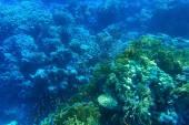 Panorama debaixo d'água com peixes — Fotografia Stock