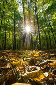Beautiful Sunlight in  forest — Stock Photo