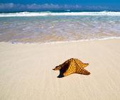 Estrela do mar com oceano — Fotografia Stock