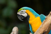 Bunte aras papagei — Stockfoto