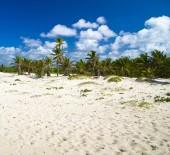 Palm trees on  sky — Stock Photo