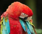 Parrot bird animal — Stock Photo