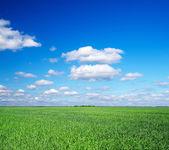 草和天空领域 — 图库照片
