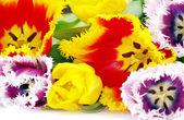 Bouquet of beautiful tulips — Stock Photo