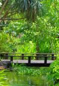 Green Garden with grass — Stock Photo