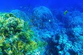 Underwater panorama with fish — Stock Photo
