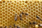 Bees swarming on  honeycomb — Stock Photo