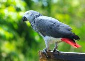 Parrot bird  sitting — Stock Photo