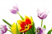 Bouquet of beautiful tulips — Stock Photo