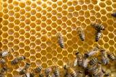 Bees swarming on  honeycombs — Stock Photo