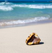 Seashell on ocean  beach — Stock fotografie