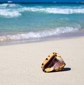 Seashell on ocean  beach — Fotografia Stock