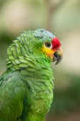 Parrot bird on nature — Stock Photo